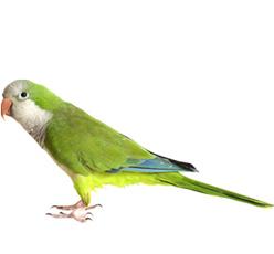 bird-product-4