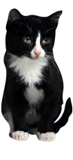 cat product 3
