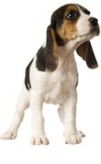 dog product 3