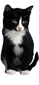 cat product 4