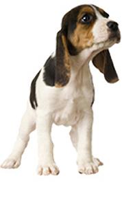 dog product 4